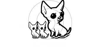 Grisous'Tiny World - Elevage Chihuahuas poil court