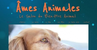 Le salon du bien-être animal 2019 de Tonneins (47)